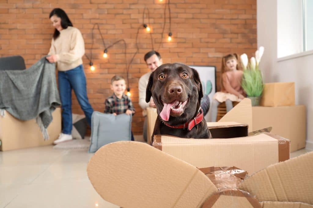 Five Things To Do When Moving with Pets